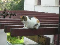 Epidauruscat2