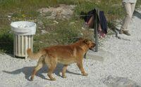Acropolis.2007.dog.2