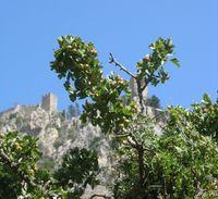 Pomegranateandcastle