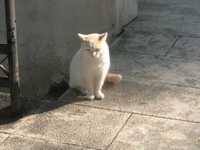 Greekcat