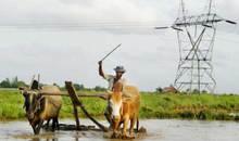 Myanmar_farmer